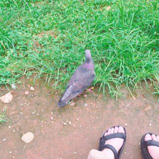 Badな気分だったからお昼に公園でハト見てた